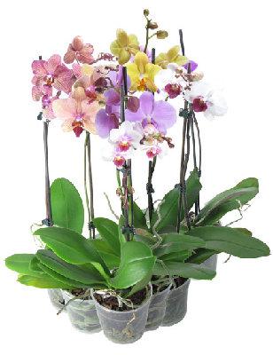 Орхидеи с мелкими цветами виды фото и названия