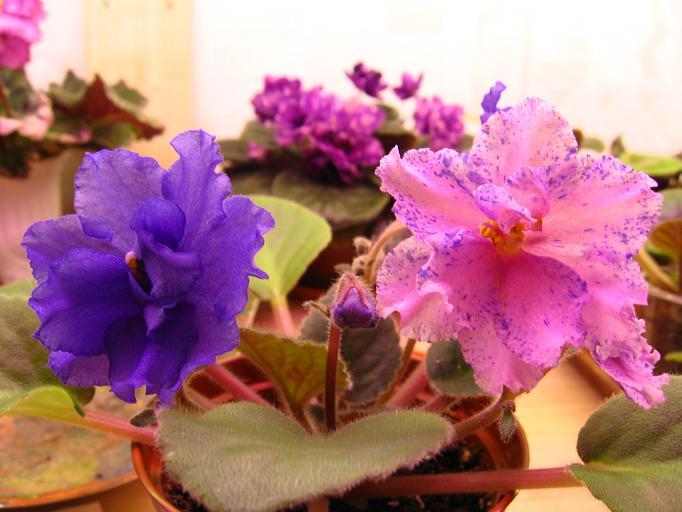 20 цветов похожих на ромашку как называются и как